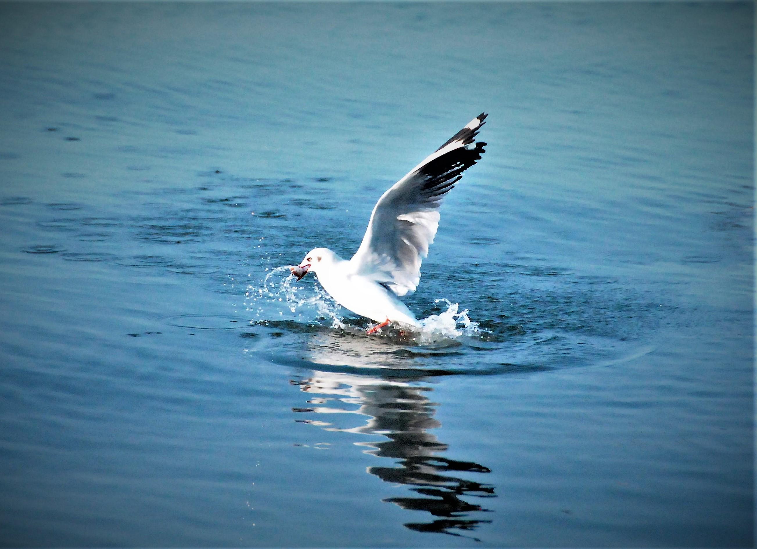 Hướng dẫn đi chụp hình chim hải âu từ TP.HCM đến Kiên Giang
