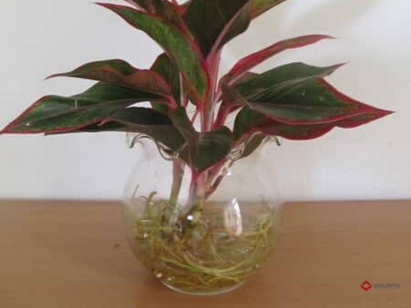 10 Loại cây theo phong thủy giúp trang trí bàn làm việc