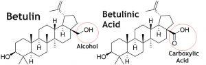 Betulin và dẫn xuất (Ảnh internet)