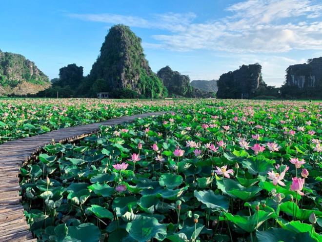 """Ngỡ ngàng hồ sen nở rộ giữa Thu ở Hang Múa (Ninh Bình), giới trẻ tha hồ chụp ảnh """"sống ảo"""" - 1"""