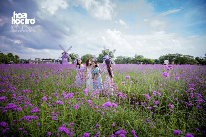 Giới trẻ Hà Nội rủ nhau check-in ở cánh đồng hoa oải hương rộng hàng chục nghìn mét vuông - 1