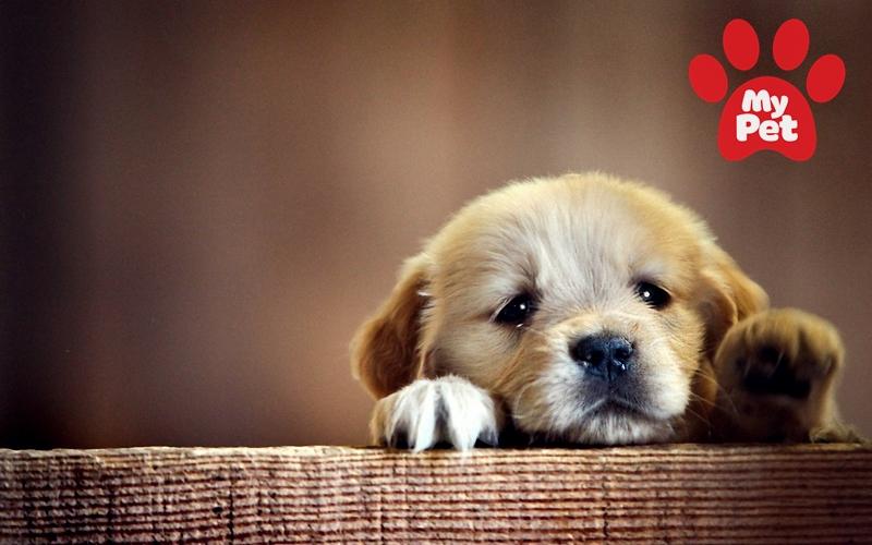 Trách nhiệm của chủ nuôi đối với thú cưng
