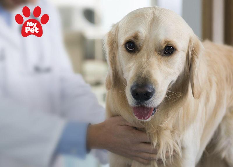Địa chỉ bệnh viện thú y ở Quận 3 – TP Hồ Chí Minh