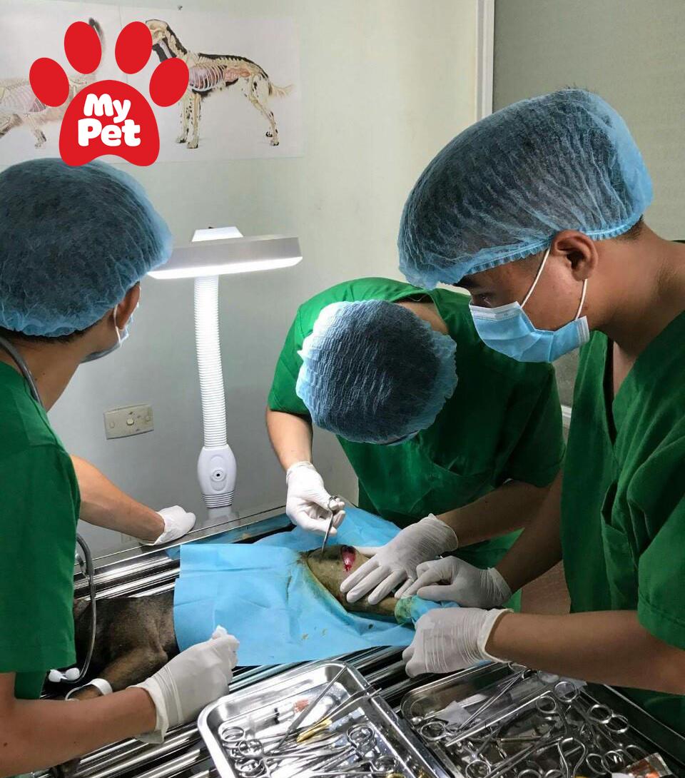 Các địa chỉ bệnh viện thú y ở quận Hai Bà Trưng, Hoàng Mai