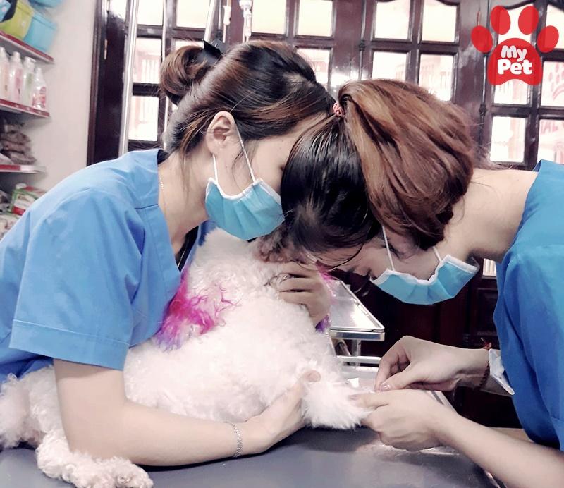6 địa chỉ bệnh viện thú y quận Đống Đa – Hà Nội