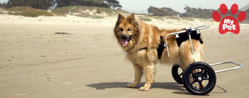 Các ca bệnh hay gặp của chó tại bệnh viện thú cưng