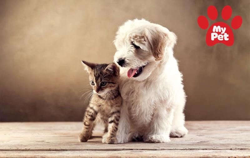 Lợi ích khác biệt khi sử dụng ứng dụng chăm sóc thú cưng