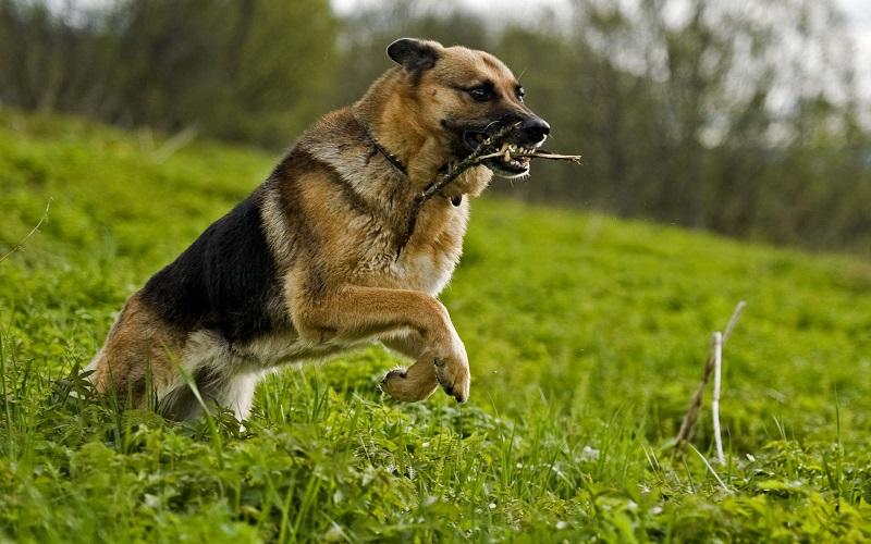Làm thế nào để khiến chó có thể lắng nghe chủ nhân