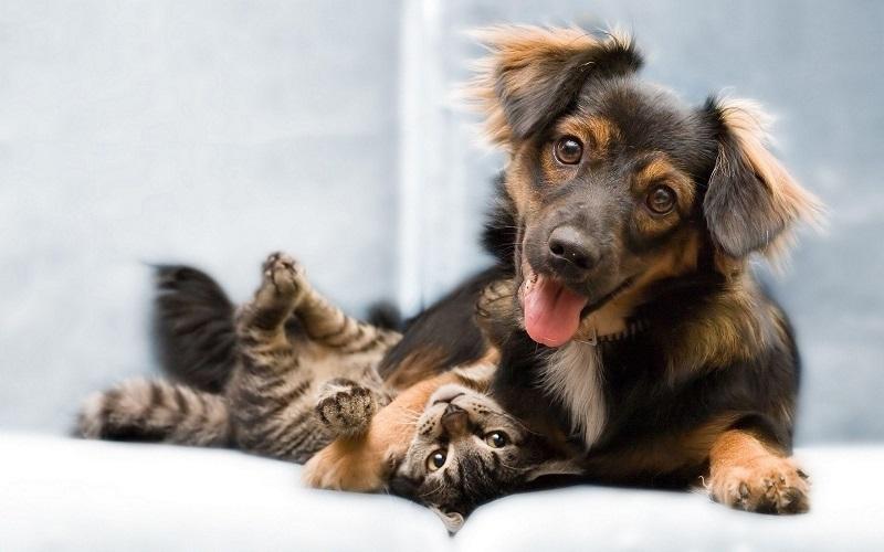 5 căn bệnh nguy hiểm lây nhiễm giữa chó mèo và con người