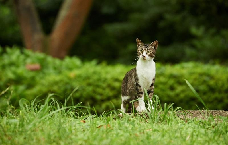 Sáu mối nguy hiểm thường gặp đối với chó mèo