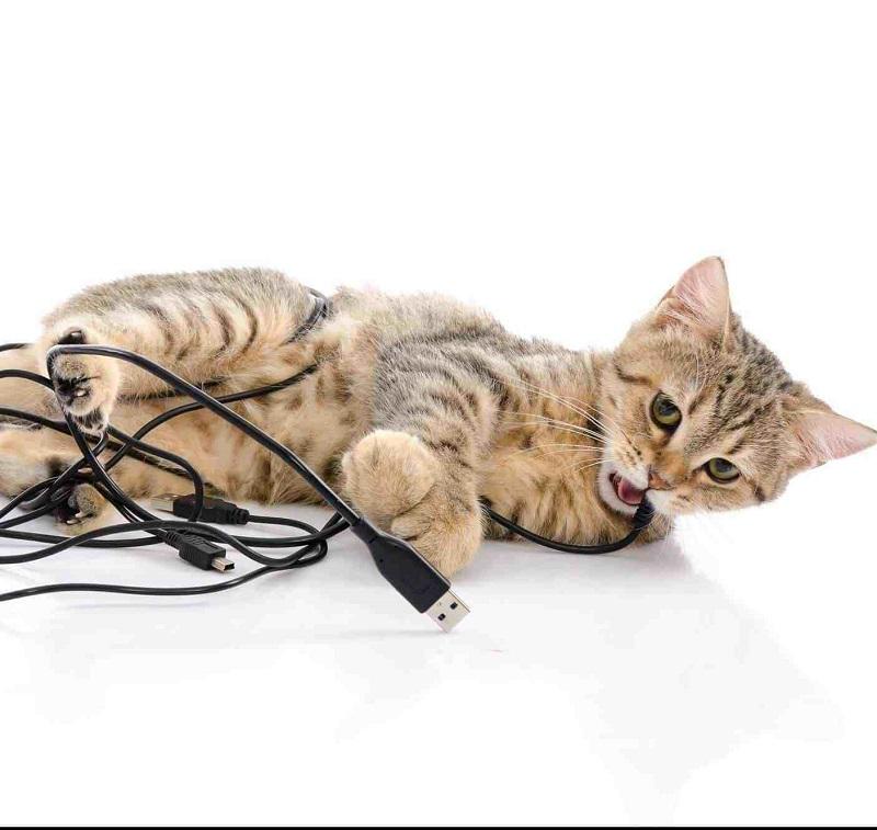 4 cách đơn giản để chó mèo không còn phá dây điện nhà bạn nữa