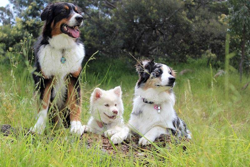 Tầm quan trọng của việc tẩy giun cho chó mèo