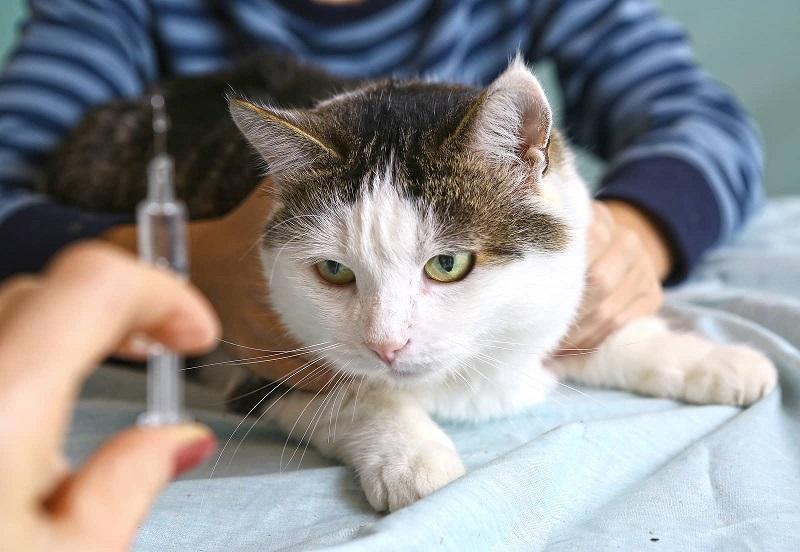 Dấu hiệu nhận biết bệnh tiểu đường ở chó mèo