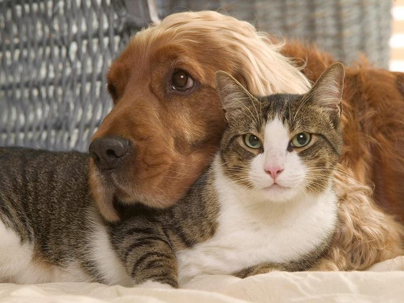 Cách tiết kiệm chi phí nuôi chó mèo cảnh