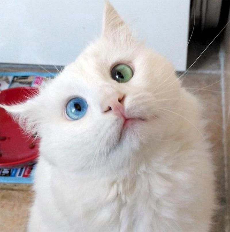 Những điều đáng ngạc nhiên bạn chưa biết về chó mèo cảnh