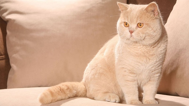 Những nguy cơ gặp phải khi nuôi chó mèo cảnh