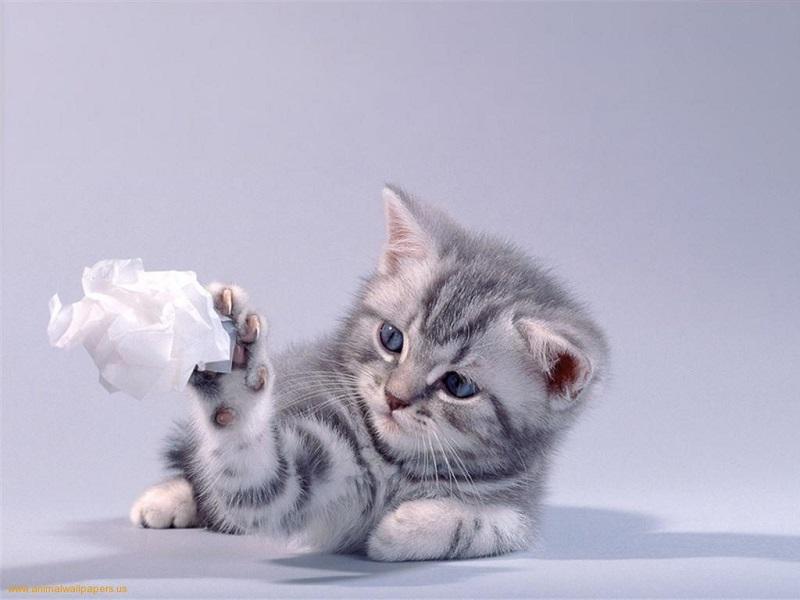 Top 4 thực phẩm vàng cho mèo con