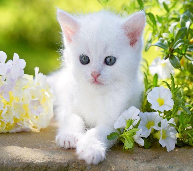 Kinh nghiệm chăm sóc cho mèo con bạn nên biết