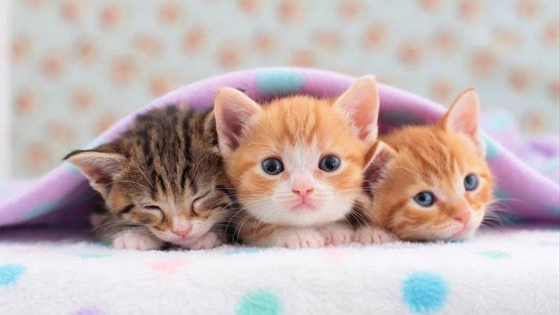 4 điều cân nhắc trước khi nhận nuôi chó mèo