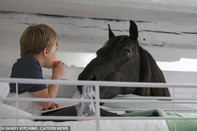 Cho người ngủ chung với ngựa, chuyện thật tưởng như đùa tại khách sạn này - 1