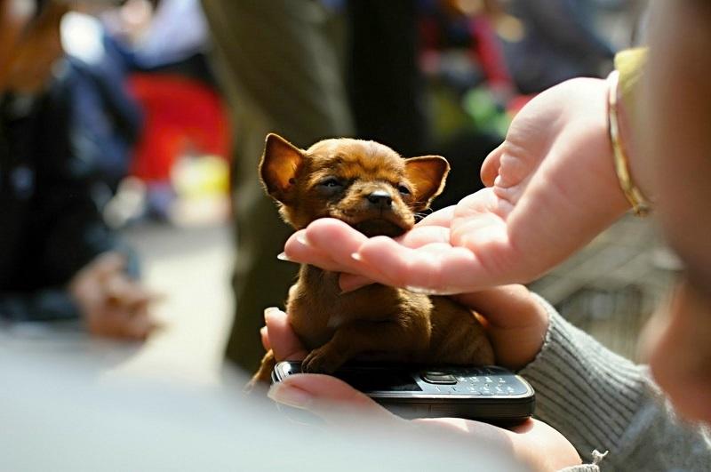 Hướng dẫn mua chó đẹp tại Chợ Tốt thú cưng