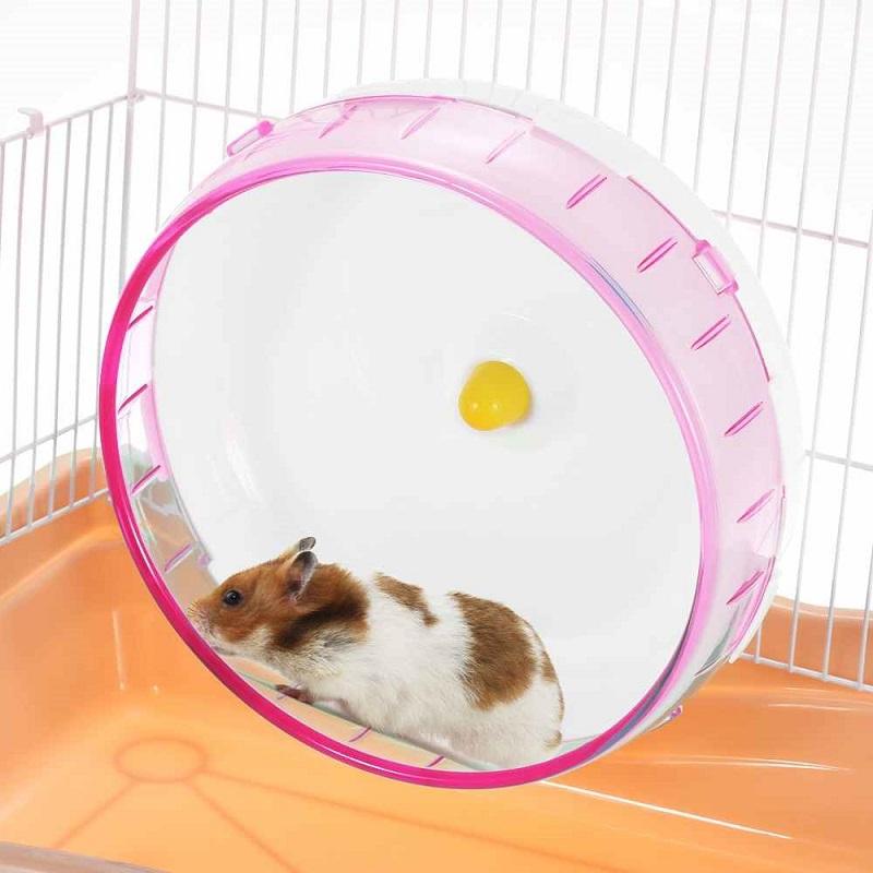 5 lý do khiến bạn lo lắng khi nuôi chuột Hamster