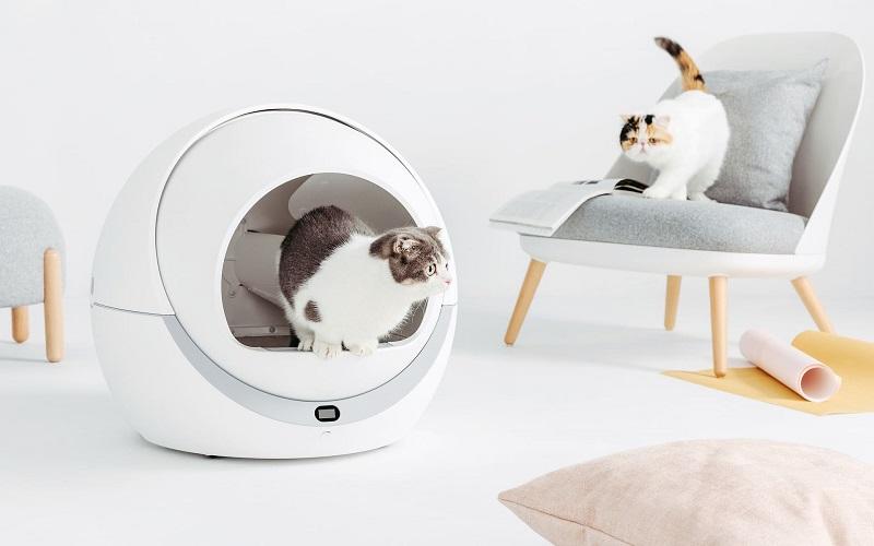 Cửa hàng thú cưng gần đây: Những vật dụng cho chó con