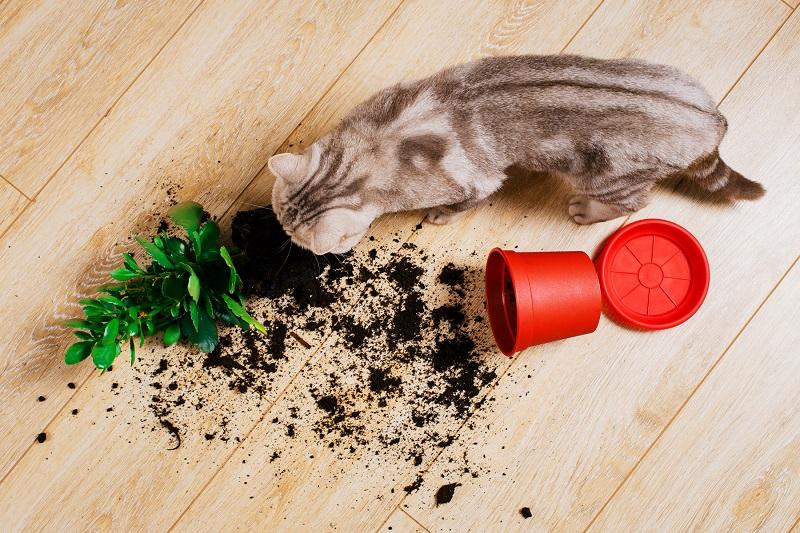 Vật dụng cho mèo có tại cửa hàng thú cưng gần đây