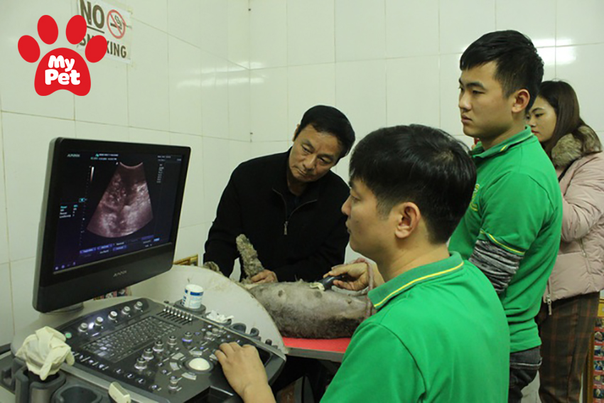 Top 3 bệnh viện thú y quận Thanh Xuân – Hà Nội