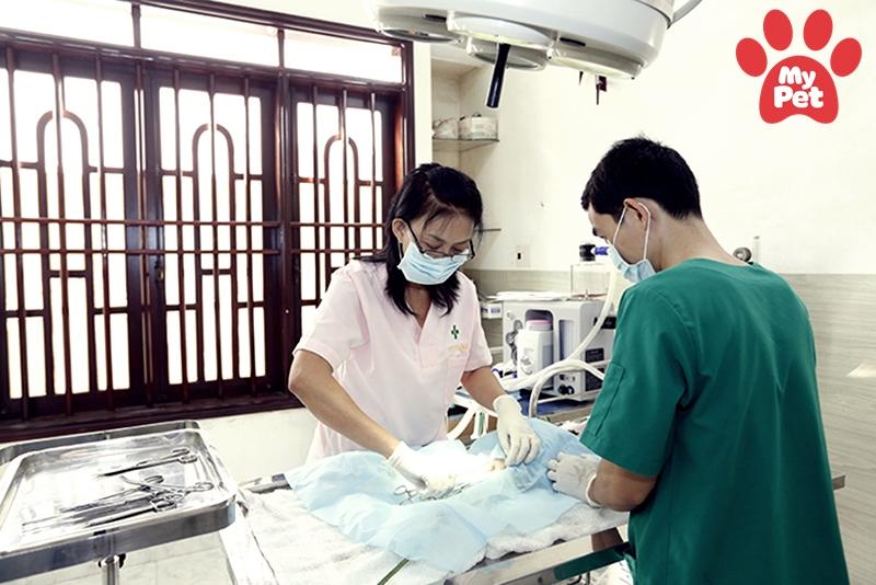 Các địa chỉ bệnh viện thú y quận Cầu Giấy – Hà Nội