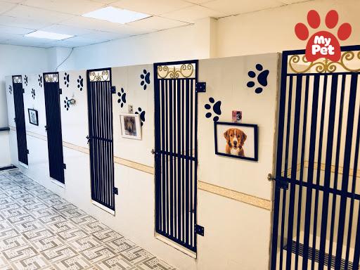 Địa chỉ khách sạn chó mèo Quận 10, 11 – TP Hồ Chí Minh