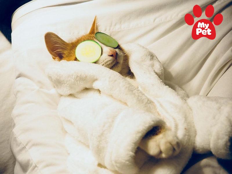 Các địa chỉ khách sạn chó mèo ở quận Hoàn Kiếm