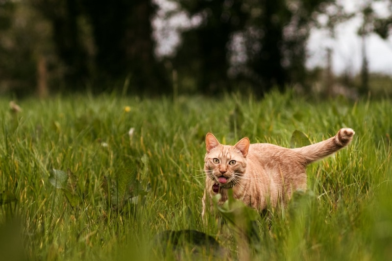 Làm thế nào để chăm sóc một chú mèo bị lạc