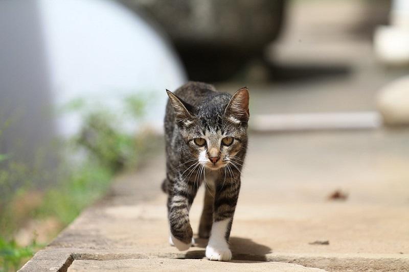 Hướng dẫn khử mùi nước tiểu của mèo đúng cách