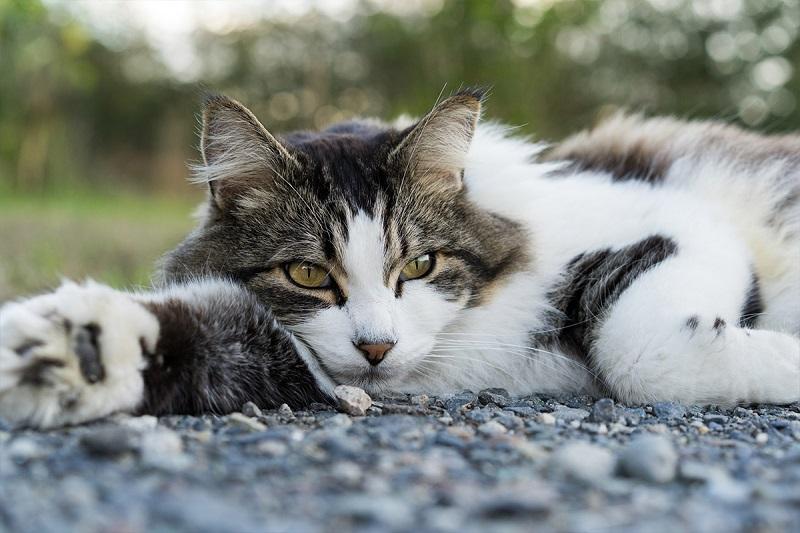 Lời khuyên từ bệnh viện thú cưng chăm sóc mèo lớn tuổi