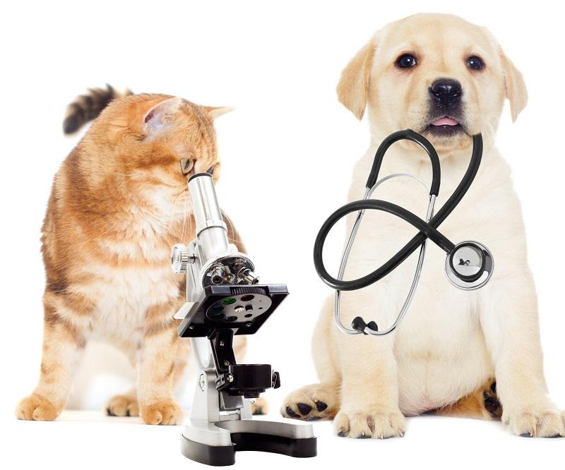 Kinh nghiệm chữa ho cho chó từ phòng khám thú cưng