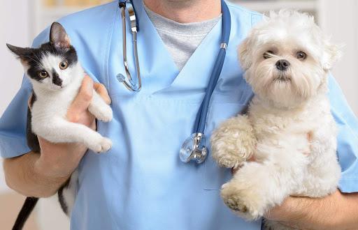 Bí quyết trị da khô cho mèo từ bệnh viện thú cưng