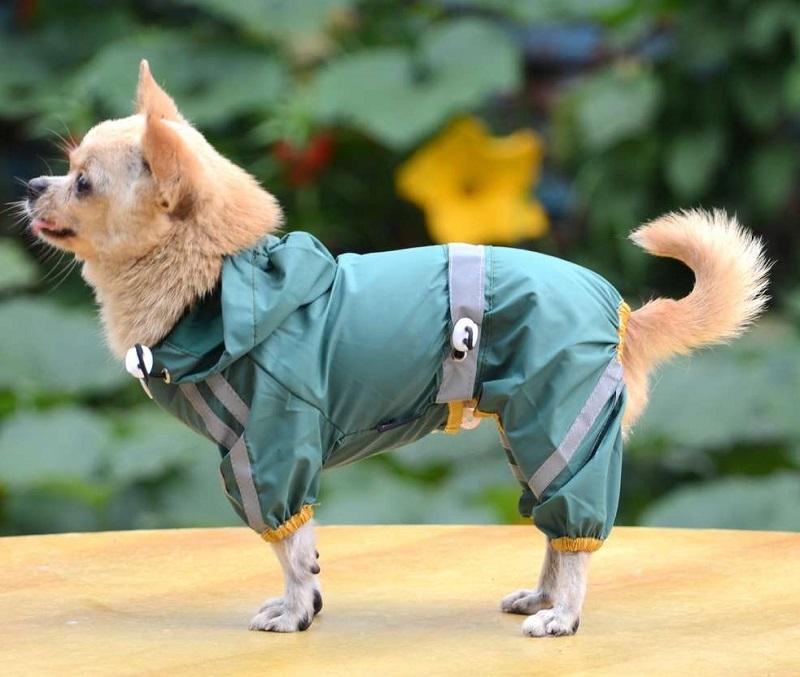 Chọn quần áo phụ kiện chó mèo đúng cách