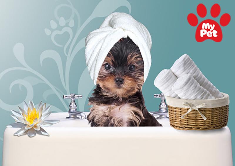 Thời điểm nào tốt nhất để spa cho chó