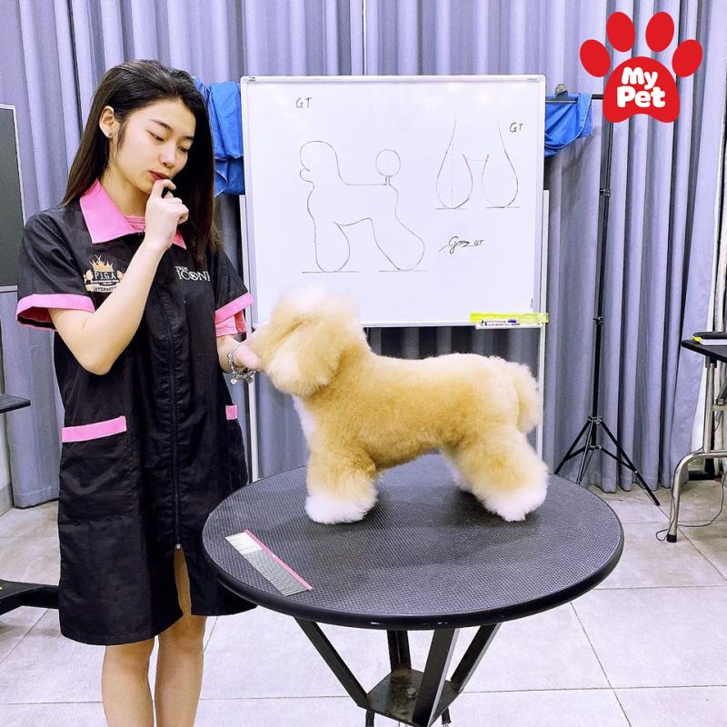 Địa chỉ spa chó mèo tại quận Đống Đa – Hà Nội
