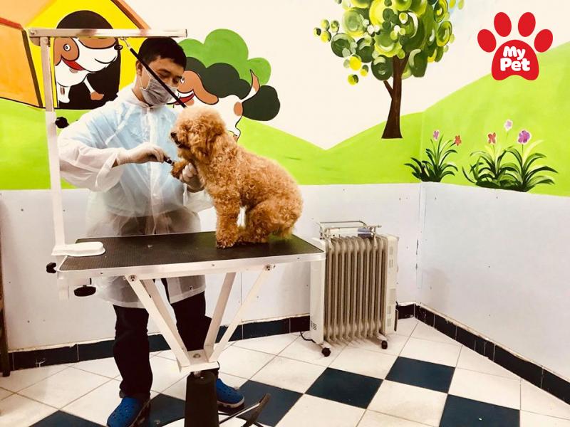 Địa chỉ spa chó mèo tại quận Thanh Xuân – Hà Nội