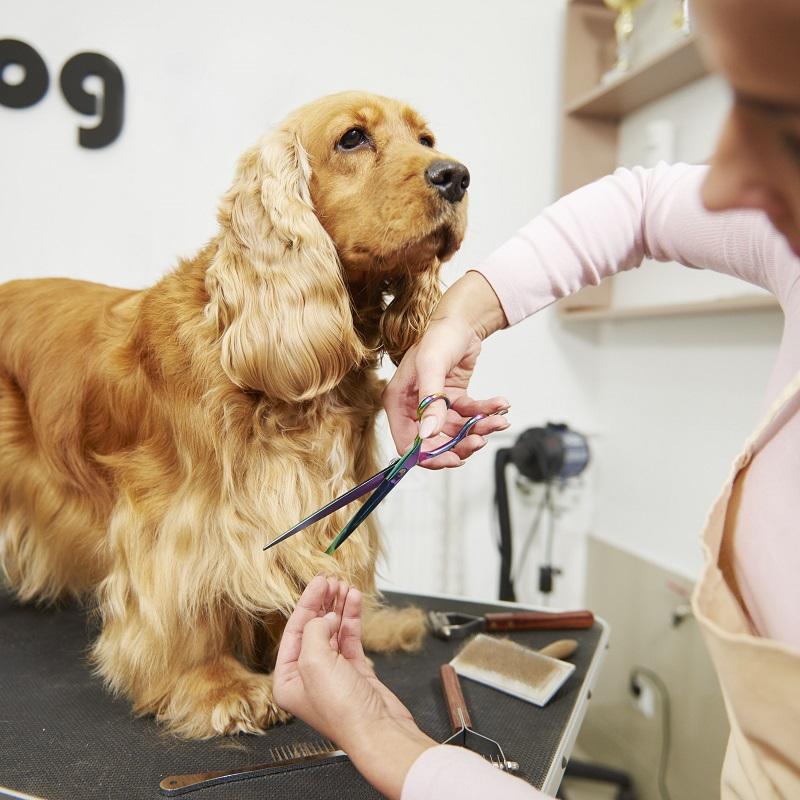 Những lưu ý khi lần đầu tiên sử dụng dịch vụ Spa thú cưng