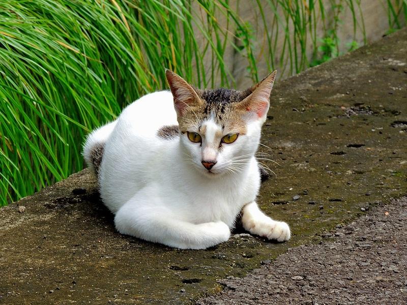 Cách chải lông cho mèo chuẩn spa thú cưng
