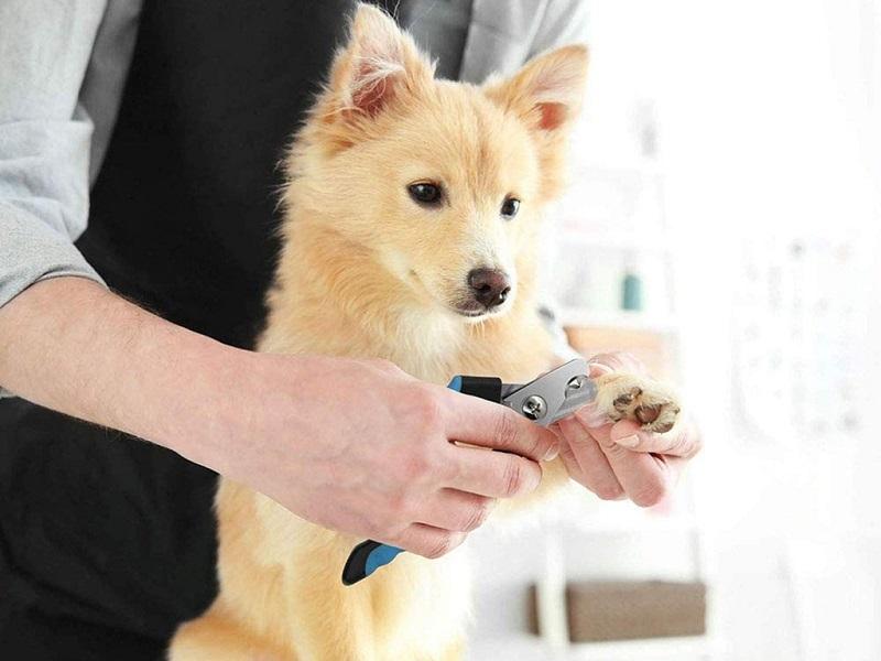 Kỹ thuật Spa thú cưng tại nhà