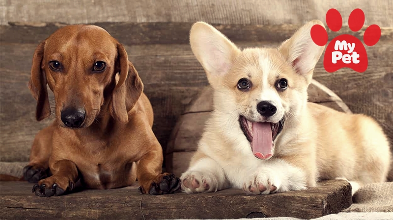 Top 5 dịch vụ Spa thú cưng uy tín nhất ở TP Hồ Chí Minh