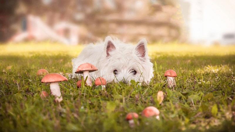 Quy trình sơ cứu thú cưng chủ nuôi cần biết