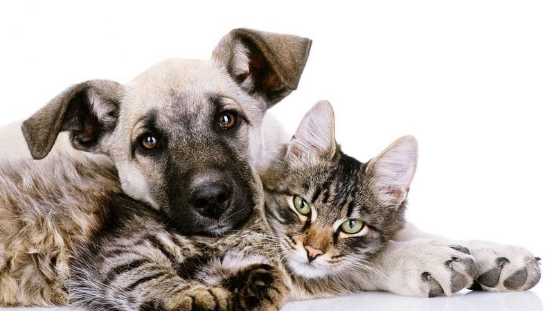 Hãy trả lời những câu hỏi này trước khi nhận nuôi thú cưng ?