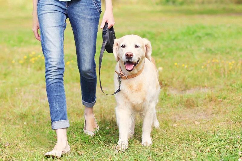 8 lời khuyên giúp bạn chăm sóc thú cưng tốt hơn