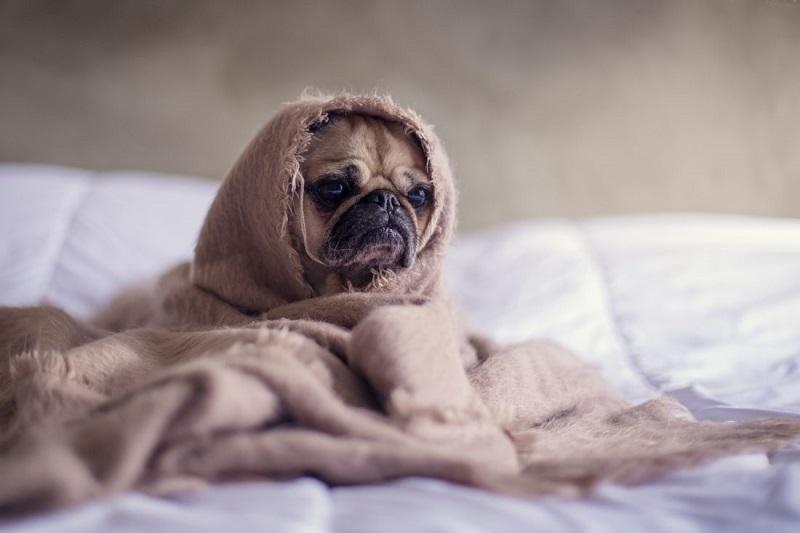 Kinh nghiệm chăm sóc thú cưng trong mùa đông