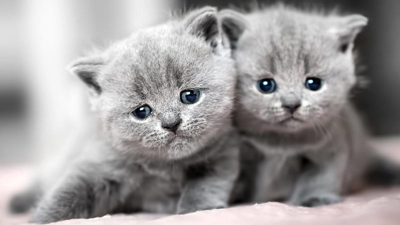Làm sao để mèo hòa đồng với những thú nuôi khác trong nhà